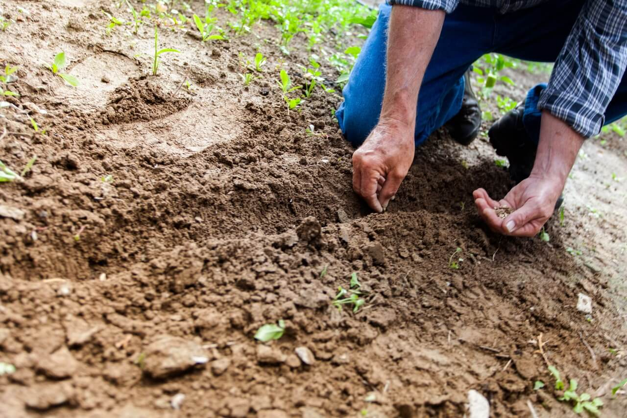 Gardening For Great Health: The Health Benefits of Diggin' in the Dirt